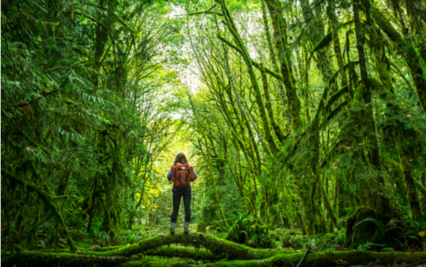 http://www.gettyimages.com/detail/photo/woman-hiking-in-the-rain-forest-high-res-stock-photography/540272877